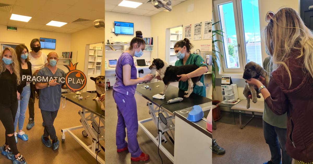 PRAGMATIC PLAY DONA 7.700€ ALLA HOMELESS ANIMAL HOSPITAL